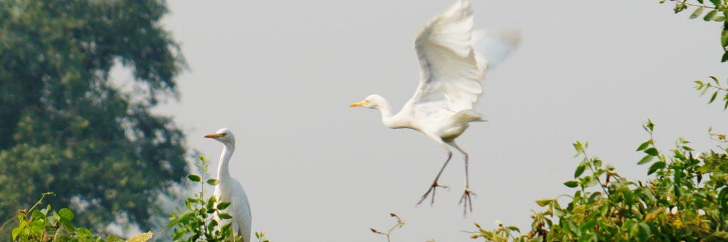 Bird Sanctuary Park' Bharatpur, Rajasthan
